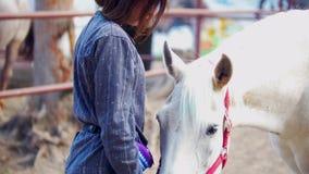 La muchacha atractiva frota ligeramente un caballo blanco en el corral almacen de video