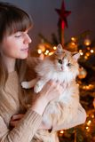 La muchacha bonita abraza el gato rojo y blanco mullido en fondo del árbol de navidad Adornando la picea danesa natural en casa imagen de archivo libre de regalías