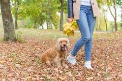 La muchacha bonita en vaqueros y la capa con las hojas coloreadas brillantes que caminan en otoño parquean con un pequeño perro r Foto de archivo libre de regalías