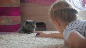 La muchacha bonita juega con un gato gris en casa Gato exótico del shorthair metrajes