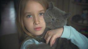 La muchacha bonita juega con un gato gris en casa Gato exótico del shorthair almacen de video