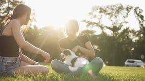 La muchacha bonita juega con un perro y sentarse en la hierba con su amigo femenino Animales, animales domésticos, amigo, emocion almacen de metraje de vídeo