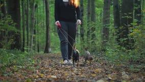 La muchacha camina en el bosque con dos pequeños perros metrajes