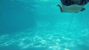 La muchacha caucásica en traje de baño azul nada delante de cámara y hace caras Visión de debajo el agua de la piscina metrajes