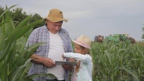 La muchacha con el abuelo en campo de maíz, el granjero de abuelo está enseñando a la generación más joven usando una tableta El  metrajes