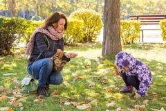 La muchacha con las bellotas de las hojas de otoño recogió de la madre en el parque Fotografía de archivo libre de regalías