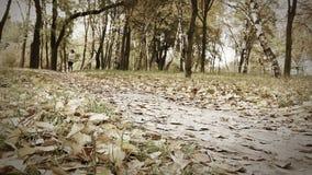 La muchacha corre con el perrito del beagle en parque otoñal almacen de metraje de vídeo