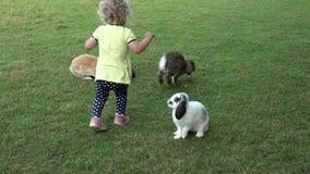 La muchacha curiosa con los pelos rizados se divierte entre los conejitos de los conejos en jardín del parque zoológico almacen de video