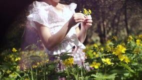 La muchacha de 9 años con las coletas en el bosque entre la naturaleza hermosa recolecta las flores salvajes almacen de metraje de vídeo