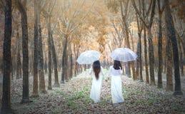 La muchacha de dos vietnamitas en vestido largo tradicional o el Ao Dai va al extremo del camino en el bosque de goma Imágenes de archivo libres de regalías
