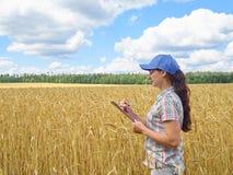 La muchacha del granjero en una camisa de tela escocesa controló su trigo del campo Fotos de archivo libres de regalías