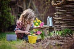 La muchacha del niño que planta el jacinto rosado florece en jardín de la primavera Imagenes de archivo