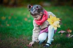 La muchacha del niño toma las hojas en el parque Fotografía de archivo