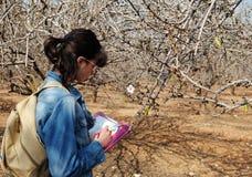 La muchacha dibuja la flor de la almendra Imagen de archivo libre de regalías