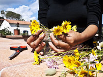 El cultivar un huerto Fotografía de archivo libre de regalías