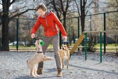 La muchacha en chaqueta anaranjada juega con dos perros Imágenes de archivo libres de regalías