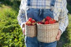 La muchacha en dril de algodón viste con las cestas de la fresa en un verano soleado Fotografía de archivo