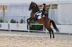 La muchacha en el caballo se alzó en la demostración Imagen de archivo