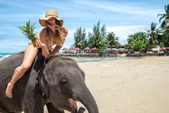 La muchacha en el elefante en la playa imagen de archivo libre de regalías