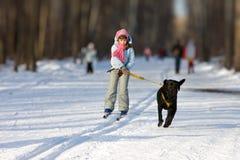 La muchacha en el esquí va para un perro. Imagen de archivo