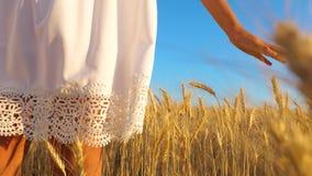 La muchacha en el vestido blanco va al campo del trigo maduro, manos de la muchacha toca los o?dos maduros del trigo, c?mara lent metrajes