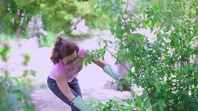 La muchacha en guantes cuida para una planta almacen de video