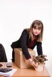 La muchacha en oficina pone el sitio de la flor en el escritorio, al lado de la caja grande Imagen de archivo libre de regalías