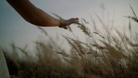La muchacha en la puesta del sol est? en el campo de flor de las flores hierba y de las manos de los tactos C?mara lenta almacen de metraje de vídeo