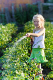 La muchacha en un jardín de cocina Foto de archivo