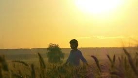 La muchacha en un vestido blanco se está colocando en un campo de trigo en un fondo de la puesta del sol almacen de metraje de vídeo