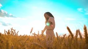La muchacha está caminando a lo largo de forma de vida el vídeo de la cámara lenta de la naturaleza del campo de trigo muchacha h metrajes
