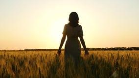 La muchacha está en un campo de trigo en la puesta del sol Silueta de una mujer en un vestido metrajes