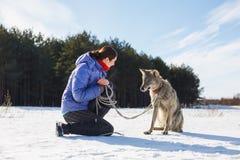 La muchacha está entrenando a un lobo malvado gris real fotos de archivo