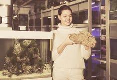 La muchacha está examinando una piedra arenisca para un acuario Imagen de archivo