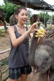 La muchacha está introduciendo el elefante del bebé Imagenes de archivo