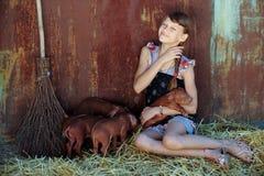 La muchacha está jugando con los cerdos recién nacidos rojos de la raza del Duroc-Jersey El concepto de cuidar y de cuidar para l imagen de archivo