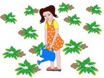 La muchacha está regando los pepinos Foto de archivo