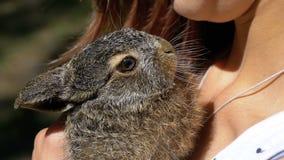 La muchacha está sosteniendo un pequeño conejito mullido salvaje del bebé Poco conejito en la palma Cámara lenta almacen de video