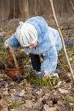 La muchacha está tomando bluebells Imagen de archivo libre de regalías