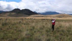 La muchacha está tomando a Guanaco de las imágenes el mamífero exótico animal salvaje en las montañas de los Andes metrajes