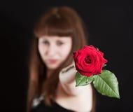 La muchacha estira una flor de la rosa Imágenes de archivo libres de regalías