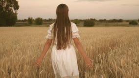 La muchacha feliz camina a través de un campo del trigo amarillo y toca los oídos del trigo con sus propias manos C?mara lenta Ch almacen de video