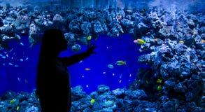 La muchacha goza de pescados del acuario Imagenes de archivo