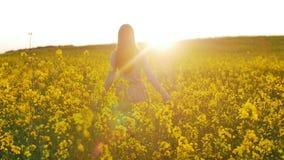 La muchacha hermosa camina en el campo de flores en la puesta del sol almacen de video