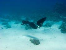 La muchacha hermosa con el monofin nada sobre parte inferior de mar Imágenes de archivo libres de regalías