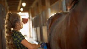 La muchacha hermosa con el pelo largo cepilla un caballo en el establo almacen de video