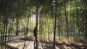 La muchacha hermosa está caminando a lo largo del callejón en la arboleda de bambú en la igualación de sunlights almacen de metraje de vídeo