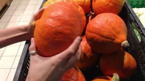 La muchacha hermosa está escogiendo una calabaza en un soporte con las verduras en el aupermarket para Autumn Fall Holidays como  metrajes