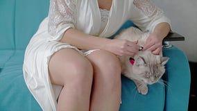 La muchacha hermosa pone una mariposa del gato siamés La muchacha se sienta en el sofá y el gato que se sientan cerca Momento fre almacen de video