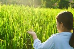 La muchacha llevó una camisa de la mezclilla que caminaba en un prado verde en la puesta del sol imágenes de archivo libres de regalías